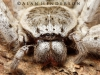 spiders___alan_henderson_1
