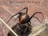 spiders___alan_henderson_13