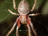 spiders___alan_henderson_143
