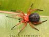 spiders___alan_henderson_208