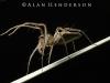 spiders_alan_henderson_13