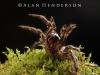 spiders_alan_henderson_67