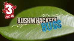 Bushwhacked Bugs