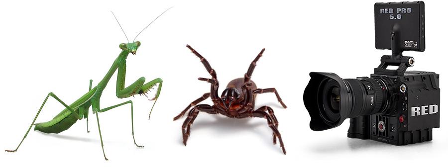 animal wrangling - bug wrangling - insect wrangling