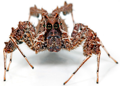 Bugs for film - Spider wrangling - Minibeast Wildlife