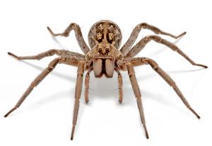 spiders minibeast wildlife