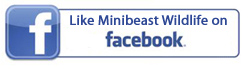 FB MBW button