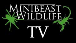 MBW TV - video