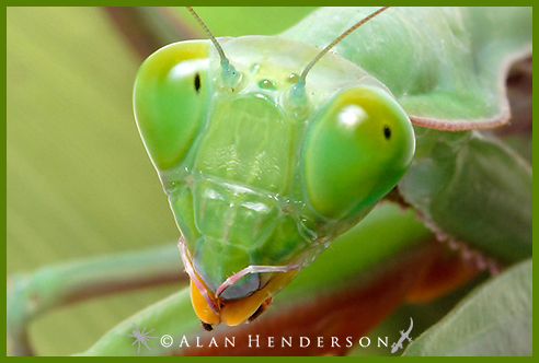 macro photography by Alan Henderson