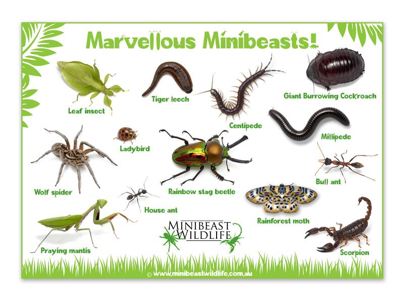Minibeast posters - Marvellous minibeasts poster