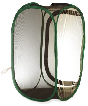 Pop-up black mesh enclosures are ideal for keeping stick insects