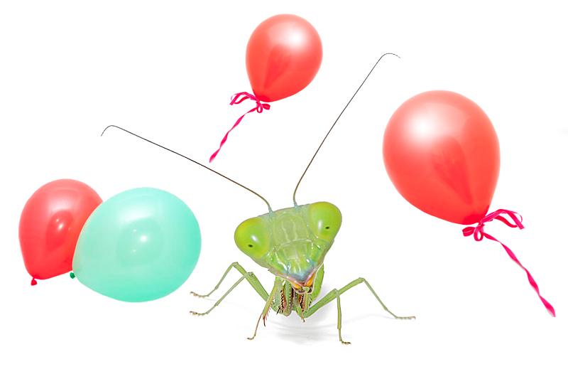 MBW 10th birthday for website blog