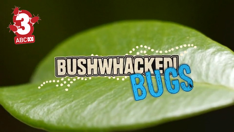Bushwhacked Bugs blog