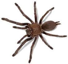 Bug keeping - spider information