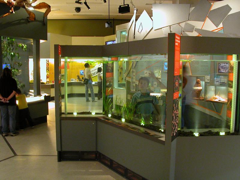 Live invertebrate displays at Melbourne Museum's Bugs Alive!