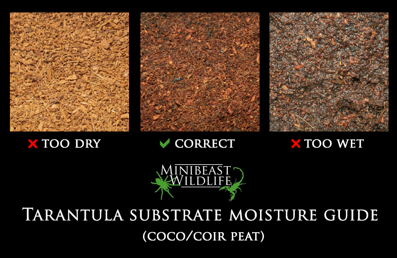 A handy guide to substrate moisture if you're using a pure coir-peat substrate, which is suitable for most purposes.