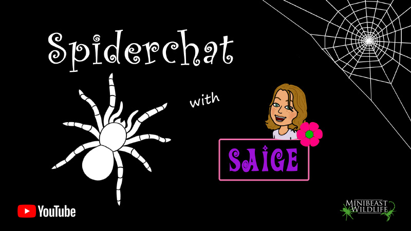 Spiderchat with Saige
