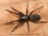 spiders___alan_henderson_12
