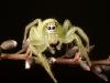 spiders___alan_henderson_135