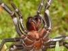 spiders___alan_henderson_136