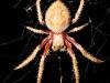 spiders___alan_henderson_142