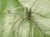 spiders___alan_henderson_147