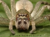 spiders___alan_henderson_16