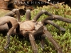 spiders___alan_henderson_195