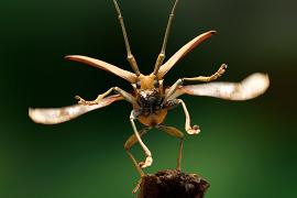 Beetles - resources