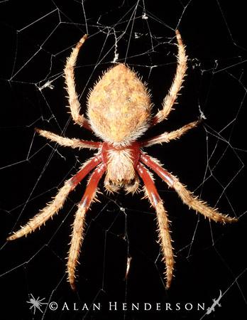 Spider Web Christmas Tree