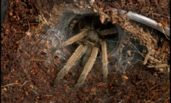 They won't go on walks to the park, but tarantulas are easy to care for and make great pets.